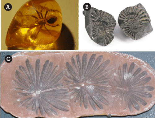 Ways Fossils Form